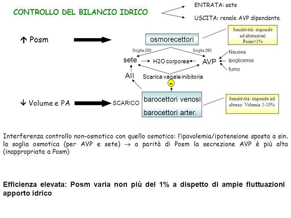 RECETTORI E CELLULE BERSAGLIO AVP V1a Cardiomiociti postcarico e crescita ipertrofica VSM contrazione (effetto pressorio) e ipertrofia Miometrio contrazione Epatociti glicogenolisi Piastrine aggregazione V1b Pre-ipofisi secrezione ACTH V2 Endotelio rilascio fattore VII e Von Willebrand attenuazione sanguinamento NEFRONE DISTALE EFFETTI RENALI
