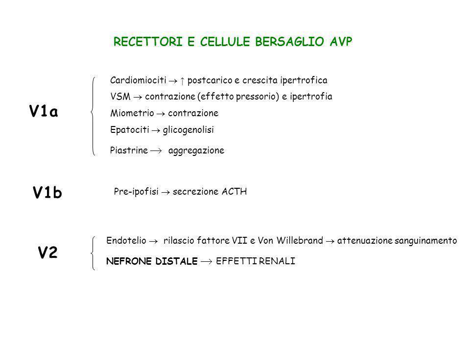 DEFICIT gene V2R (cromosoma X): NDI cong.