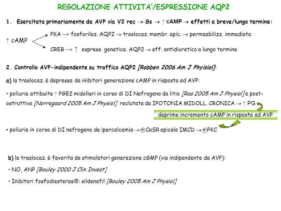 deprime incremento cAMP in risposta ad AVP 2. Controllo AVP-indipendente su traffico AQP2 [Robben 2006 Am J Phyisiol]: a) la traslocaz. è depressa da