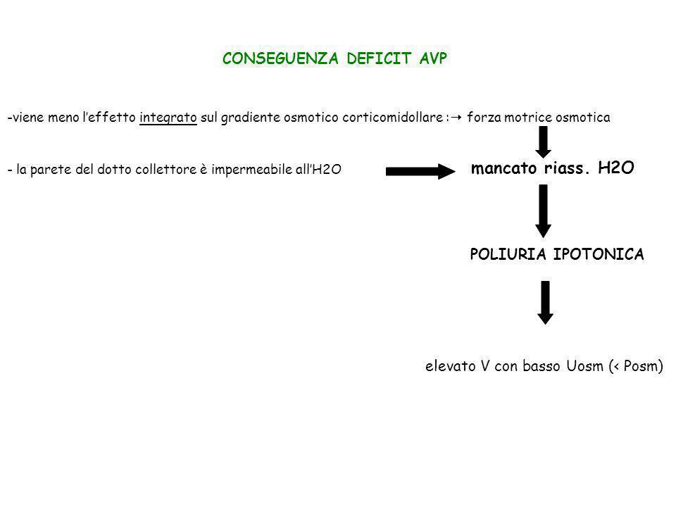CONSEGUENZA DEFICIT AVP -viene meno leffetto integrato sul gradiente osmotico corticomidollare : forza motrice osmotica mancato riass. H2O POLIURIA IP