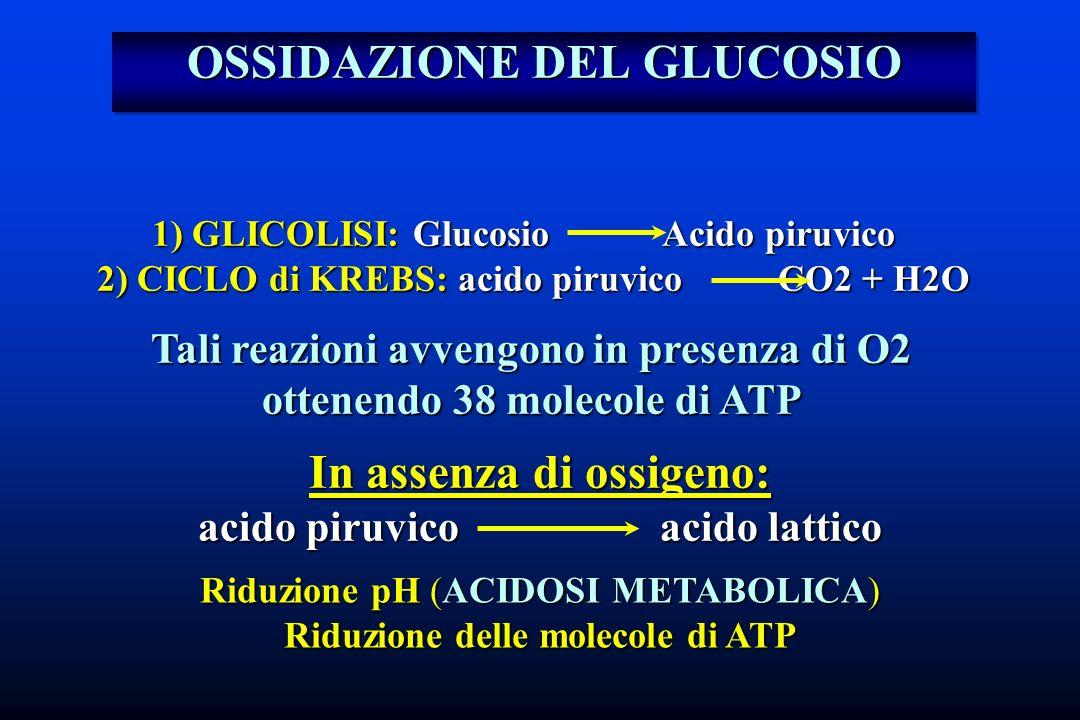 OSSIDAZIONE DEL GLUCOSIO 1) GLICOLISI: Glucosio Acido piruvico 2) CICLO di KREBS: acido piruvico CO2 + H2O 2) CICLO di KREBS: acido piruvico CO2 + H2O
