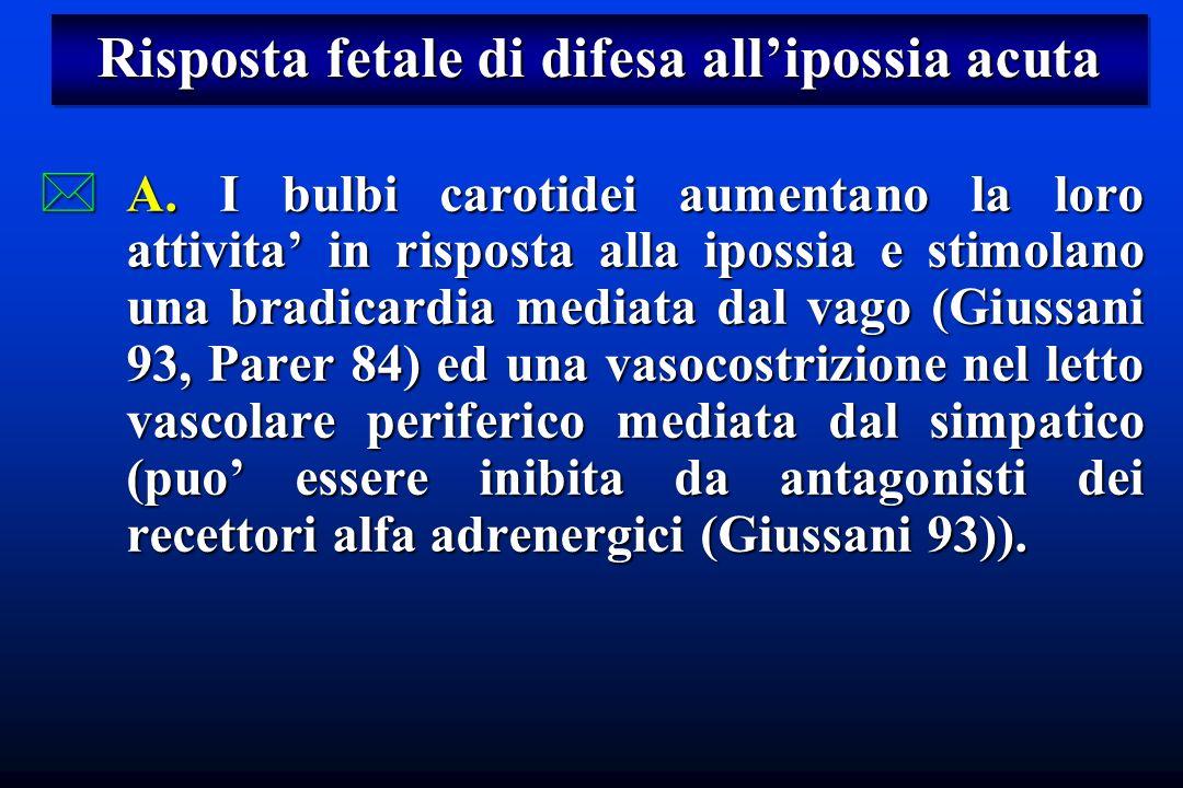 Risposta fetale di difesa allipossia acuta *A. I bulbi carotidei aumentano la loro attivita in risposta alla ipossia e stimolano una bradicardia media