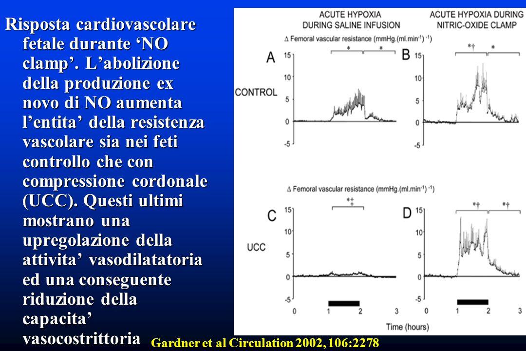 Risposta cardiovascolare fetale durante NO clamp. Labolizione della produzione ex novo di NO aumenta lentita della resistenza vascolare sia nei feti c