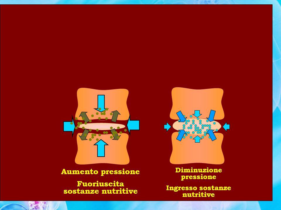 Movimentazione Manuale dei Carichi Rischi per la Salute Disco Intervertebrale Rischi: Microfissurazioni dellanulus fibroso con migrazione di materiale del nucleo polposo Protrusioni discali Ernie discali Fenomeni degenerativi