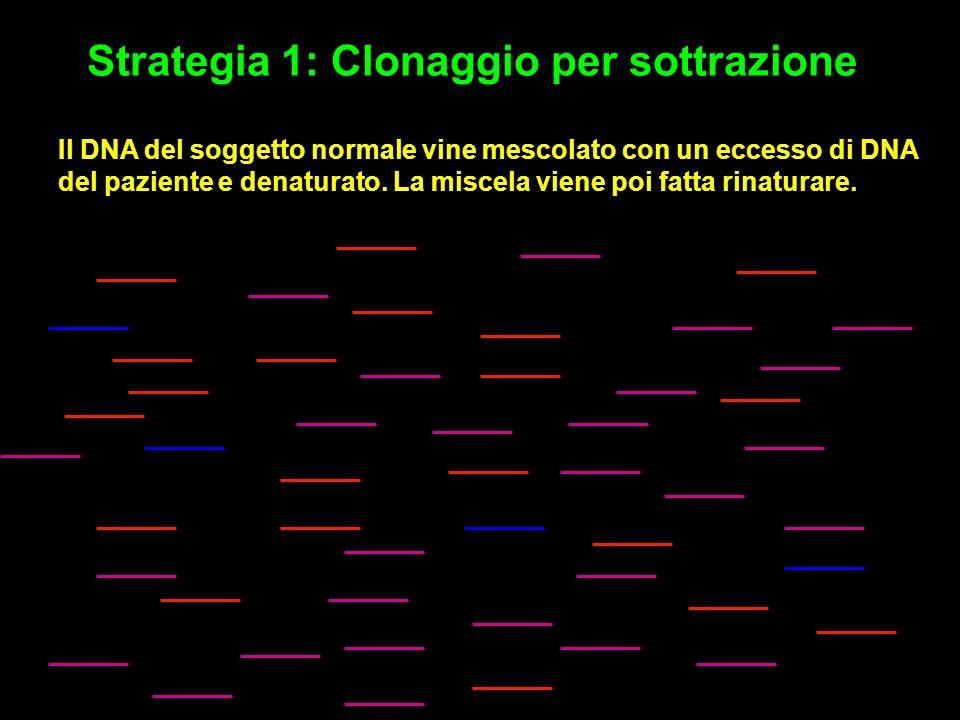 Strategia 1: Clonaggio per sottrazione Il DNA del soggetto normale vine mescolato con un eccesso di DNA del paziente e denaturato.