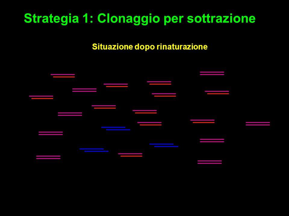 Strategia 1: Clonaggio per sottrazione Situazione dopo rinaturazione