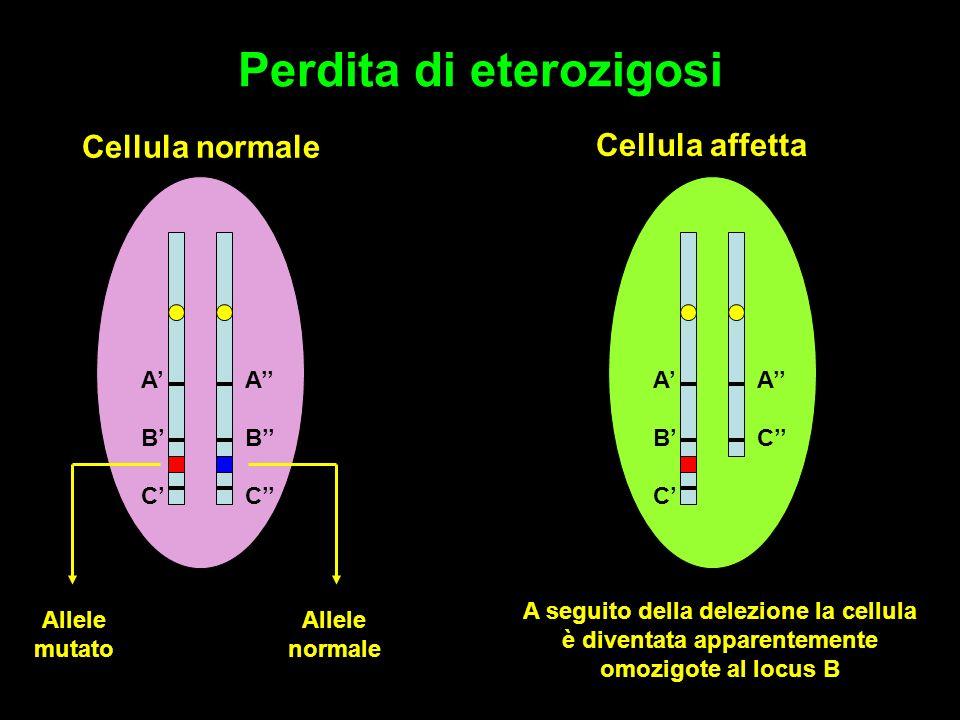 Perdita di eterozigosi Cellula normale ABCABC ABCABC Allele mutato Allele normale ABCABC ACAC Cellula affetta A seguito della delezione la cellula è diventata apparentemente omozigote al locus B