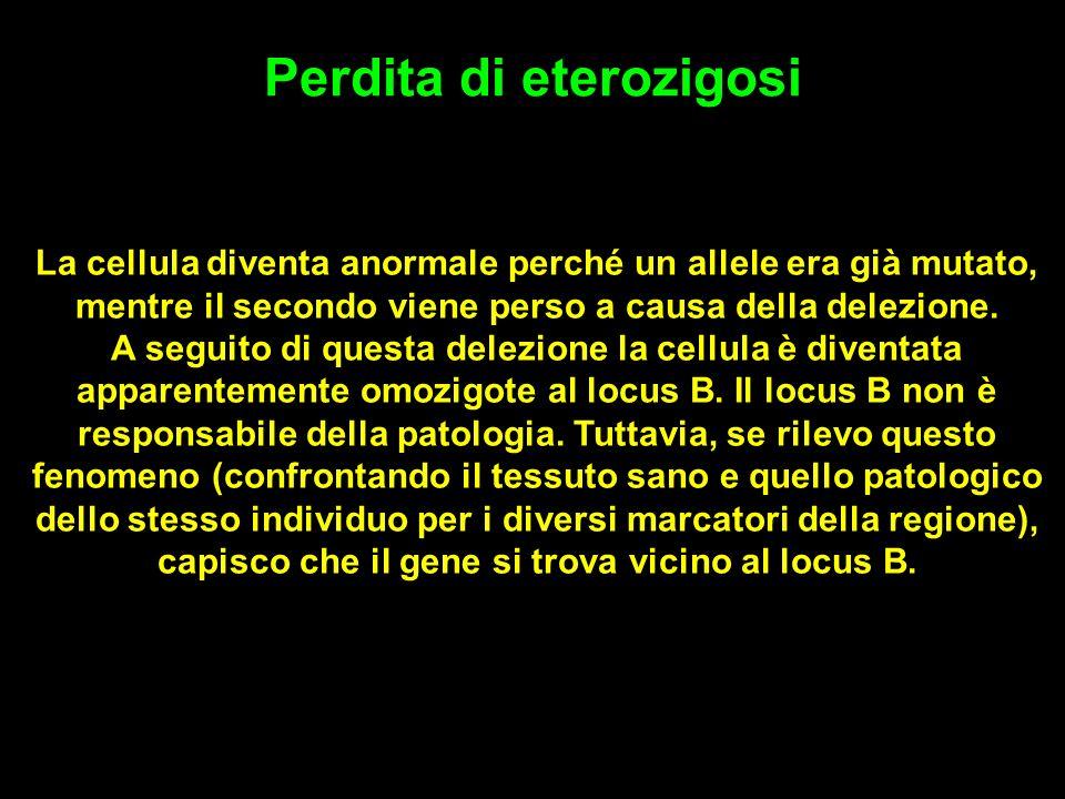 Perdita di eterozigosi La cellula diventa anormale perché un allele era già mutato, mentre il secondo viene perso a causa della delezione.