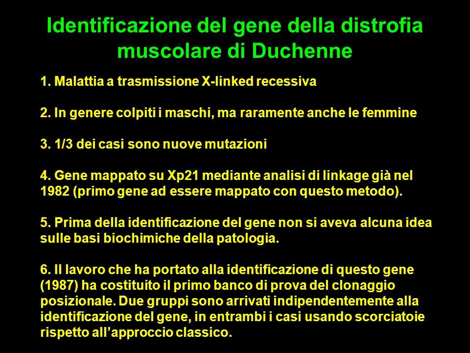 1.Malattia a trasmissione X-linked recessiva 2.