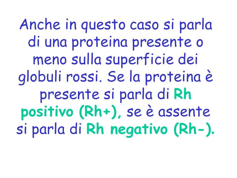 Anche in questo caso si parla di una proteina presente o meno sulla superficie dei globuli rossi. Se la proteina è presente si parla di Rh positivo (R