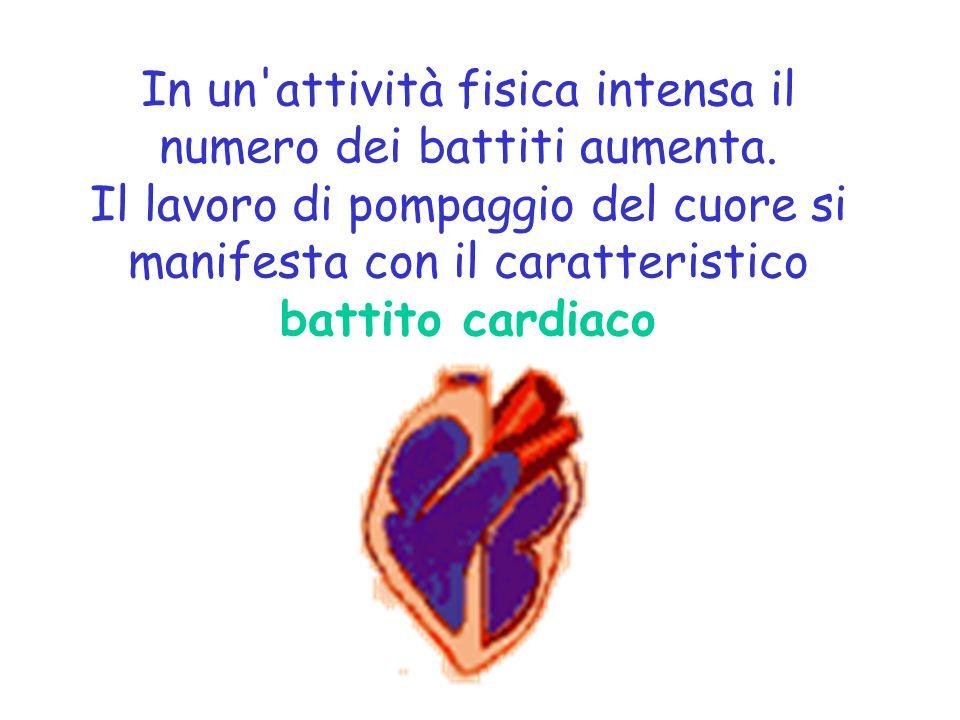 In un'attività fisica intensa il numero dei battiti aumenta. Il lavoro di pompaggio del cuore si manifesta con il caratteristico battito cardiaco