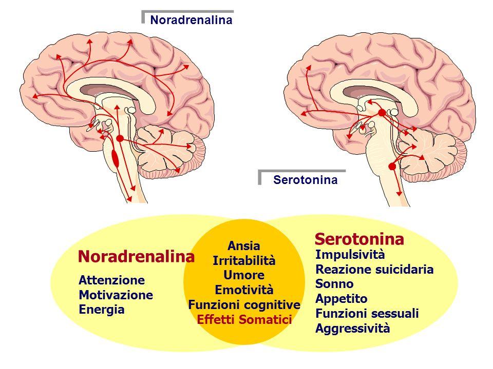 Noradrenalina Serotonina Ansia Irritabilità Umore Emotività Funzioni cognitive Effetti Somatici Noradrenalina Serotonina Attenzione Motivazione Energia Impulsività Reazione suicidaria Sonno Appetito Funzioni sessuali Aggressività