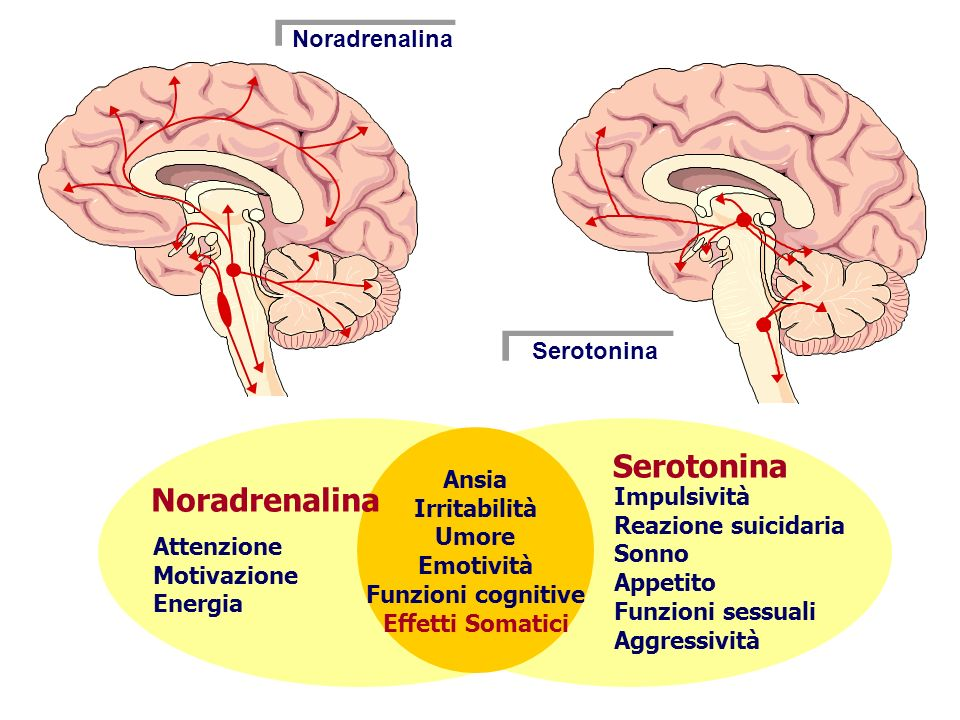 Psychosocial Stress Glia Glu Normal Trophic factors Glia Glu Depression Trophic factors Glu AD Glia Glu Recovery Trophic factors GABA Glia Glu Relapse Trophic factors AD withdrawal Glu GABA