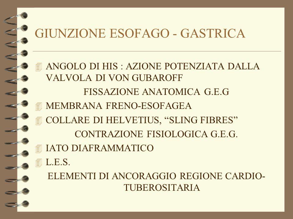 GIUNZIONE ESOFAGO - GASTRICA 4 ANGOLO DI HIS : AZIONE POTENZIATA DALLA VALVOLA DI VON GUBAROFF FISSAZIONE ANATOMICA G.E.G 4 MEMBRANA FRENO-ESOFAGEA 4