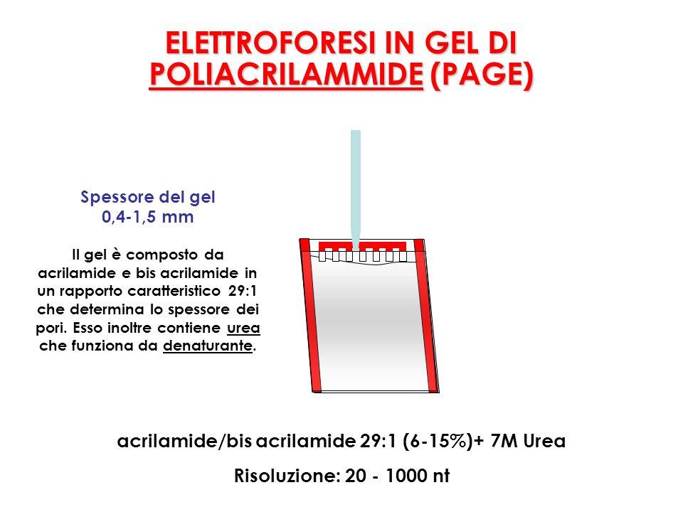 acrilamide/bis acrilamide 29:1 (6-15%)+ 7M Urea Spessore del gel 0,4-1,5 mm Il gel è composto da acrilamide e bis acrilamide in un rapporto caratteristico 29:1 che determina lo spessore dei pori.