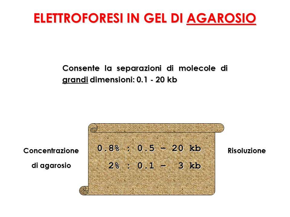 ELETTROFORESI IN GEL DI AGAROSIO Consente la separazioni di molecole di grandi dimensioni: 0.1 - 20 kb Concentrazione di agarosio Risoluzione 0.8% : 0.5 – 20 kb 0.8% : 0.5 – 20 kb 2% : 0.1 – 3 kb 2% : 0.1 – 3 kb