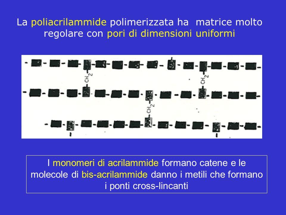La poliacrilammide polimerizzata ha matrice molto regolare con pori di dimensioni uniformi I monomeri di acrilammide formano catene e le molecole di b