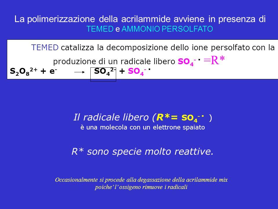 La polimerizzazione della acrilammide avviene in presenza di TEMED e AMMONIO PERSOLFATO TEMED catalizza la decomposizione dello ione persolfato con la