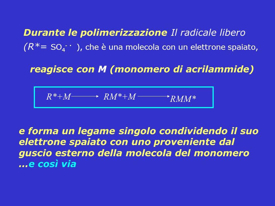 Durante le polimerizzazione Il radicale libero (R*= SO 4 -. ), che è una molecola con un elettrone spaiato, reagisce con M (monomero di acrilammide) R