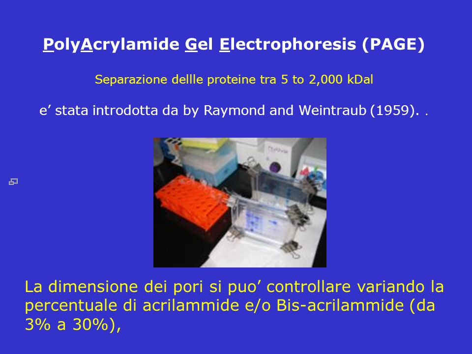 PolyAcrylamide Gel Electrophoresis (PAGE) Separazione dellle proteine tra 5 to 2,000 kDal e stata introdotta da by Raymond and Weintraub (1959).. La d