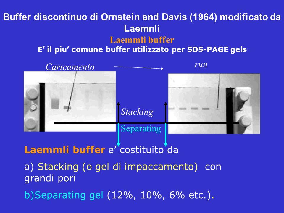Buffer discontinuo di Ornstein and Davis (1964) modificato da Laemnli Laemmli buffer E il piu comune buffer utilizzato per SDS-PAGE gels I Caricamento