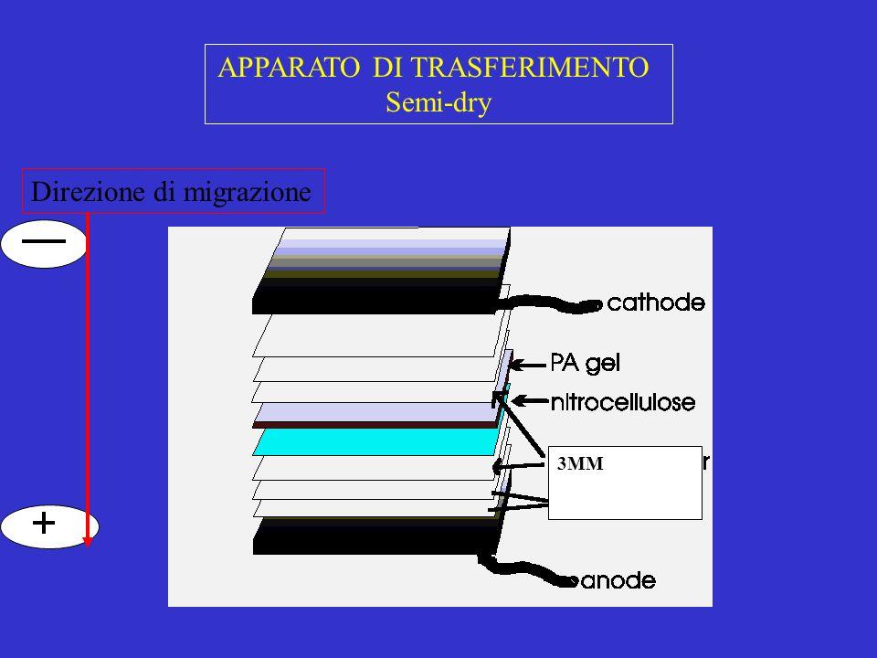 APPARATO DI TRASFERIMENTO Semi-dry 3MM Direzione di migrazione