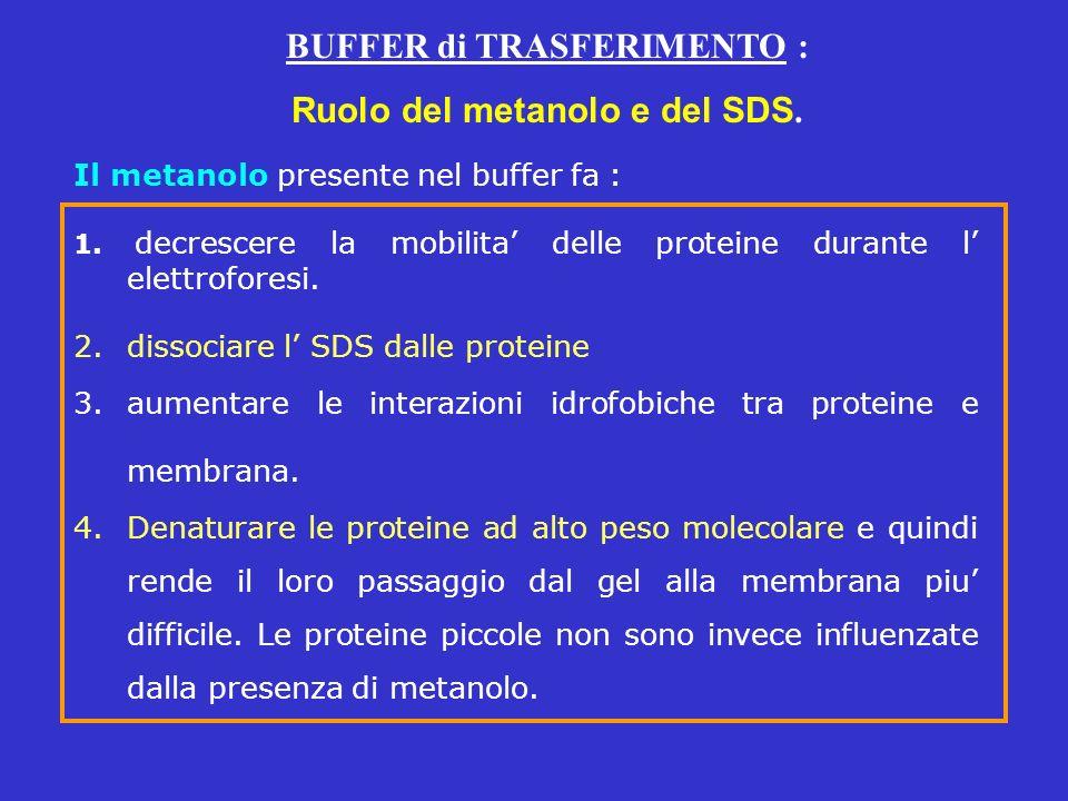 Il metanolo presente nel buffer fa : 1. decrescere la mobilita delle proteine durante l elettroforesi. 2.dissociare l SDS dalle proteine 3.aumentare l
