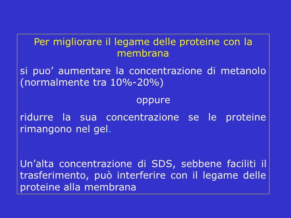 Per migliorare il legame delle proteine con la membrana si puo aumentare la concentrazione di metanolo (normalmente tra 10%-20%) oppure ridurre la sua