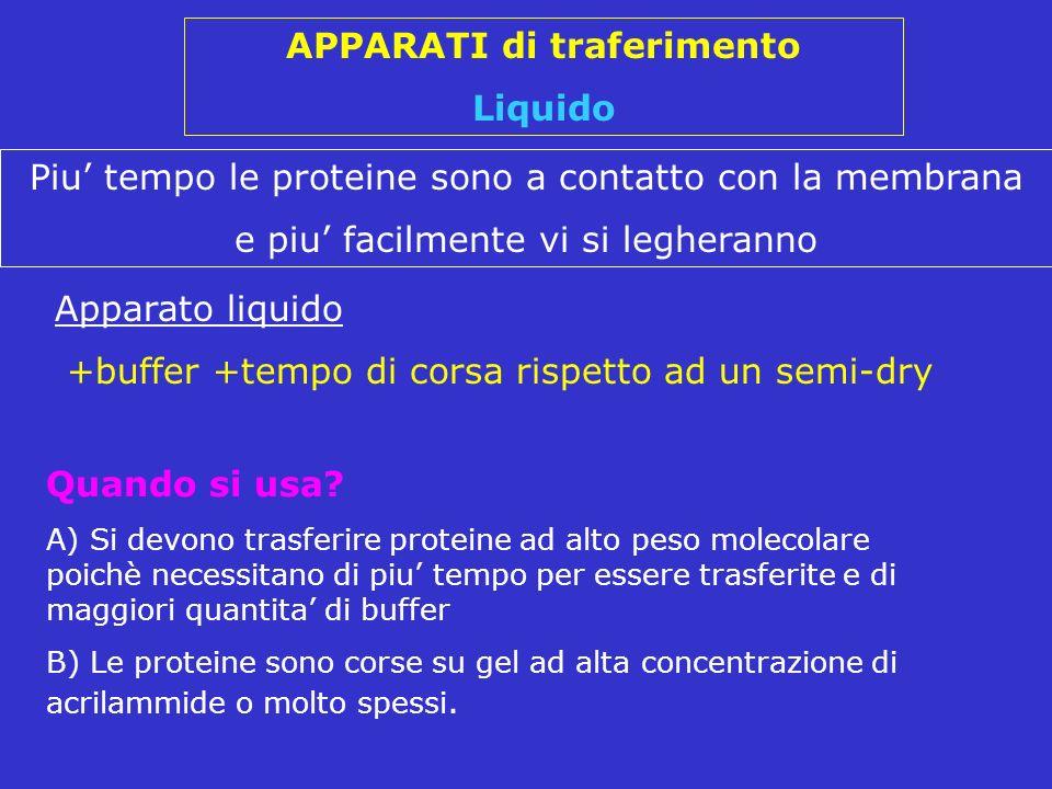 Apparato liquido +buffer +tempo di corsa rispetto ad un semi-dry Piu tempo le proteine sono a contatto con la membrana e piu facilmente vi si legheran
