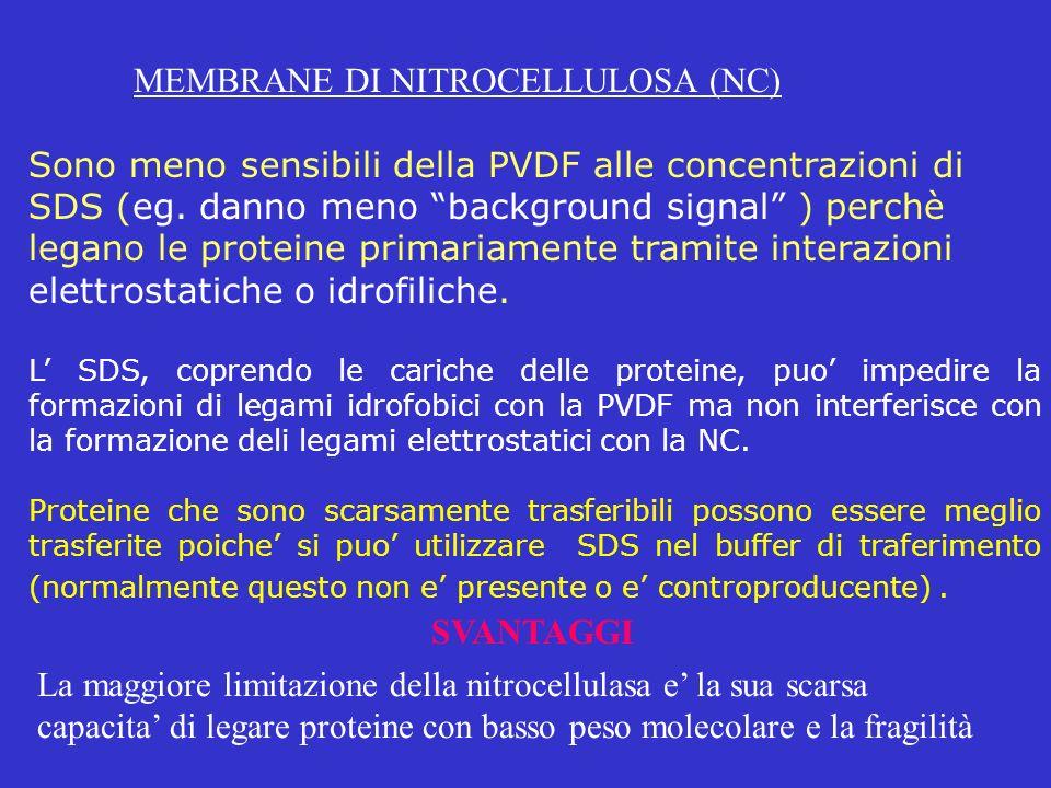 MEMBRANE DI NITROCELLULOSA (NC) Sono meno sensibili della PVDF alle concentrazioni di SDS (eg. danno meno background signal ) perchè legano le protein