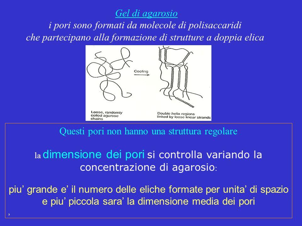 Questi pori non hanno una struttura regolare la dimensione dei pori si controlla variando la concentrazione di agarosio : piu grande e il numero delle