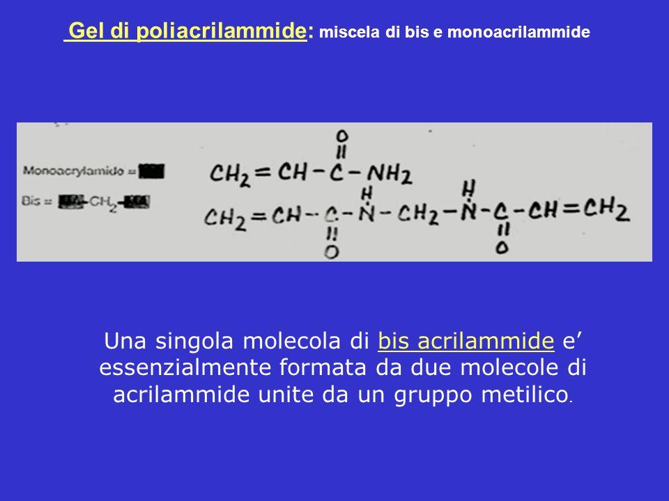 Gel di poliacrilammide: miscela di bis e monoacrilammide Una singola molecola di bis acrilammide e essenzialmente formata da due molecole di acrilammi