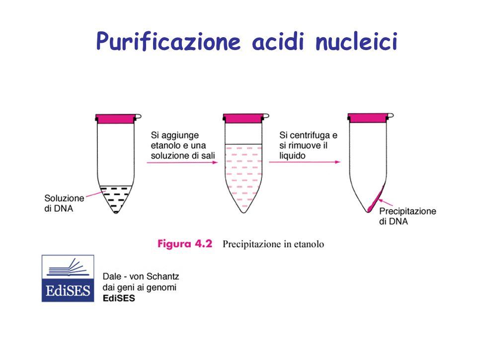 Protocollo artigianale Colonnine cromatografiche (kit commerciali) Isolamento DNA plasmidico