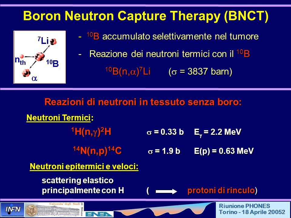 Riunione PHONES Torino - 18 Aprile 20052 Boron Neutron Capture Therapy (BNCT) - 10 B accumulato selettivamente nel tumore - Reazione dei neutroni termici con il 10 B - Reazione dei neutroni termici con il 10 B 10 B(n, ) 7 Li ( = 3837 barn) Reazioni di neutroni in tessuto senza boro: Neutroni Termici : 1 H(n, ) 2 H = 0.33 b E = 2.2 MeV 14 N(n,p) 14 C = 1.9 b E(p) = 0.63 MeV 14 N(n,p) 14 C = 1.9 b E(p) = 0.63 MeV Neutroni epitermici e veloci: Neutroni epitermici e veloci: scattering elastico principalmente con H (protoni di rinculo)