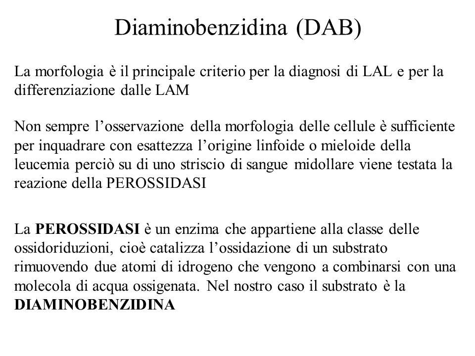 Diaminobenzidina (DAB) La morfologia è il principale criterio per la diagnosi di LAL e per la differenziazione dalle LAM Non sempre losservazione dell