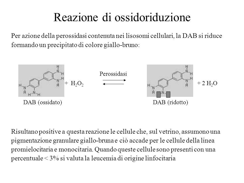 Reazione di ossidoriduzione Per azione della perossidasi contenuta nei lisosomi cellulari, la DAB si riduce formando un precipitato di colore giallo-b