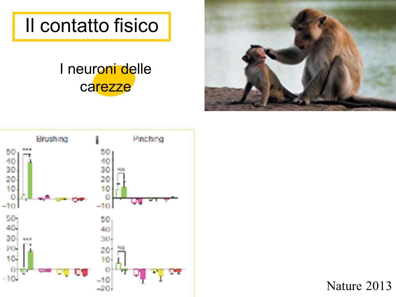 Il contatto fisico Nature 2013 I neuroni delle carezze
