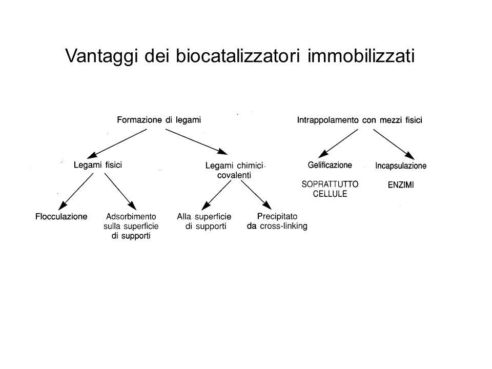Biocatalizzatori immobilizzati