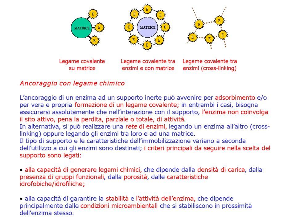 Formazione di un legame covalente tra enzima e supporto La formazione del legame avviene in 3 fasi 1.Attivazione del supporto