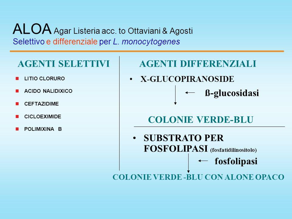 ALOA Agar Listeria acc. to Ottaviani & Agosti Selettivo e differenziale per L. monocytogenes LITIO CLORURO ACIDO NALIDIXICO CEFTAZIDIME CICLOEXIMIDE P