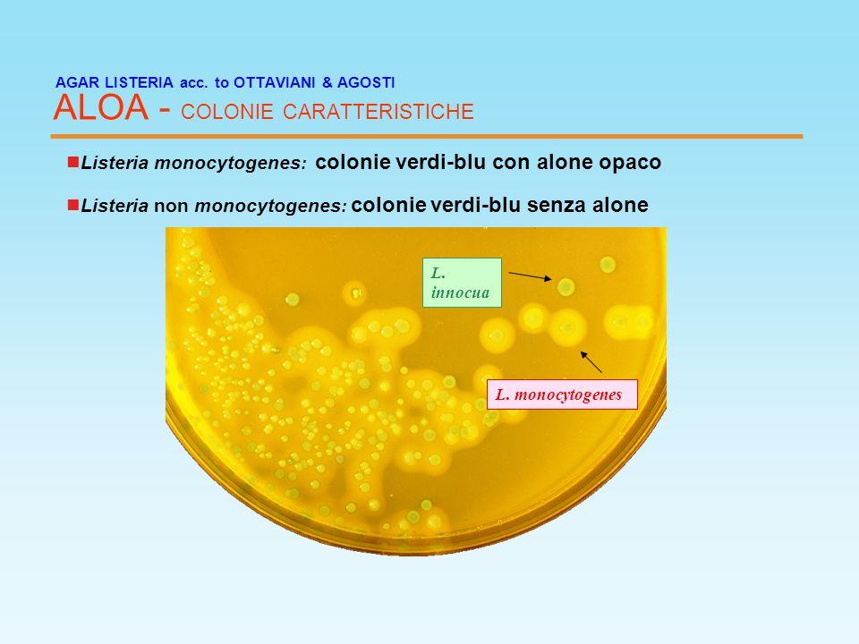 AGAR LISTERIA acc. to OTTAVIANI & AGOSTI ALOA - COLONIE CARATTERISTICHE Listeria monocytogenes : colonie verdi-blu con alone opaco L. monocytogenes L.