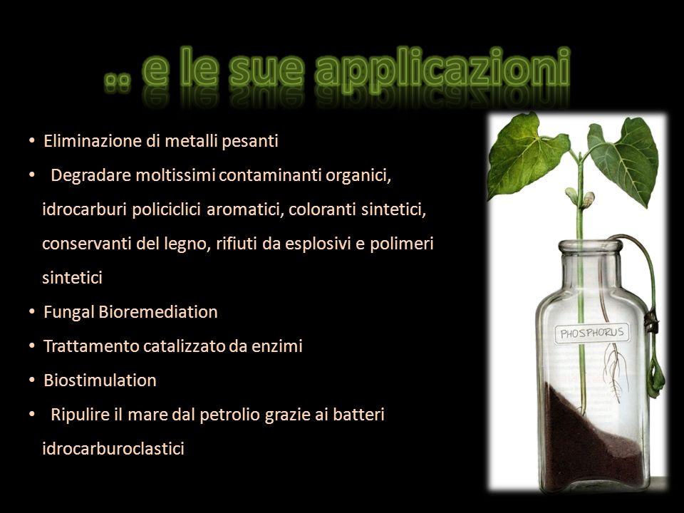 E Eliminazione di metalli pesanti D Degradare moltissimi contaminanti organici, idrocarburi policiclici aromatici, coloranti sintetici, conservanti de