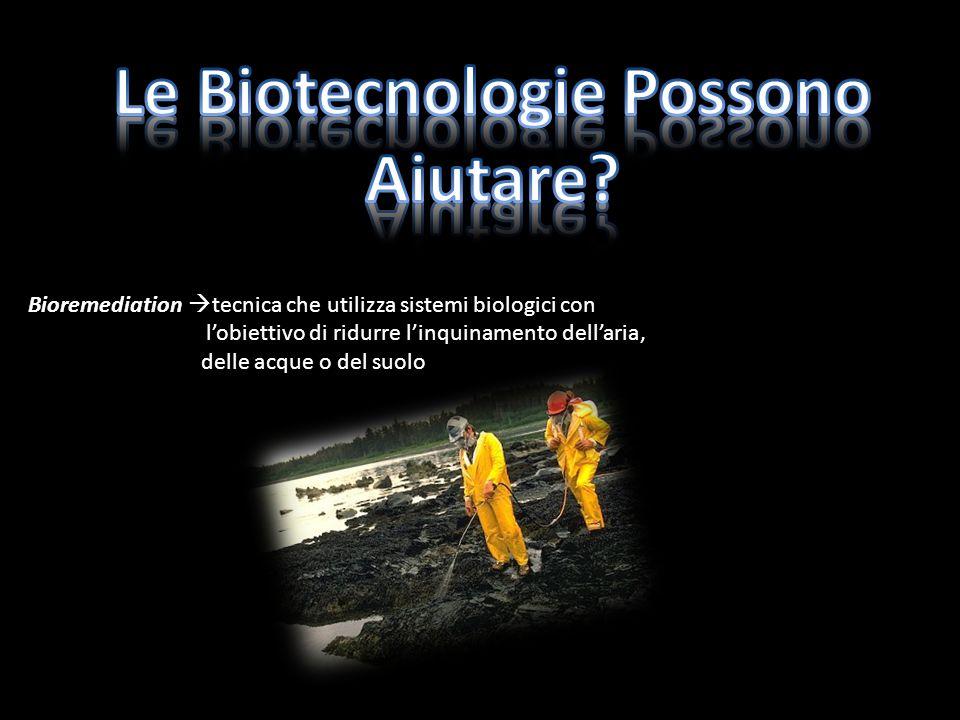 Bioremediation tecnica che utilizza sistemi biologici con lobiettivo di ridurre linquinamento dellaria, delle acque o del suolo