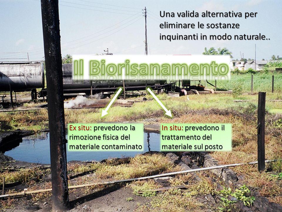 Una valida alternativa per eliminare le sostanze inquinanti in modo naturale.. Ex situ: prevedono la rimozione fisica del materiale contaminato In sit