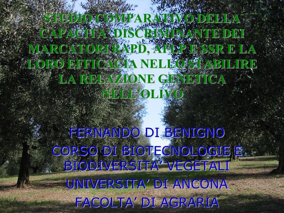 STUDIO COMPARATIVO DELLA CAPACITA DISCRIMINANTE DEI MARCATORI RAPD, AFLP E SSR E LA LORO EFFICACIA NELLO STABILIRE LA RELAZIONE GENETICA NELLOLIVO FER