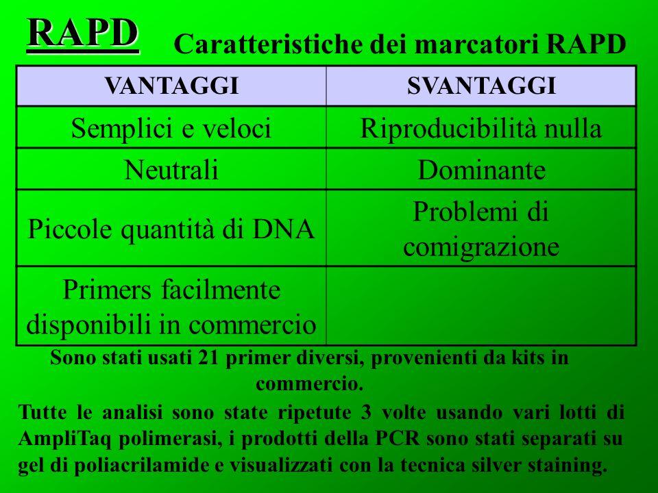 VANTAGGISVANTAGGI Semplici e velociRiproducibilità nulla NeutraliDominante Piccole quantità di DNA Problemi di comigrazione Primers facilmente disponibili in commercioRAPD Caratteristiche dei marcatori RAPD Sono stati usati 21 primer diversi, provenienti da kits in commercio.