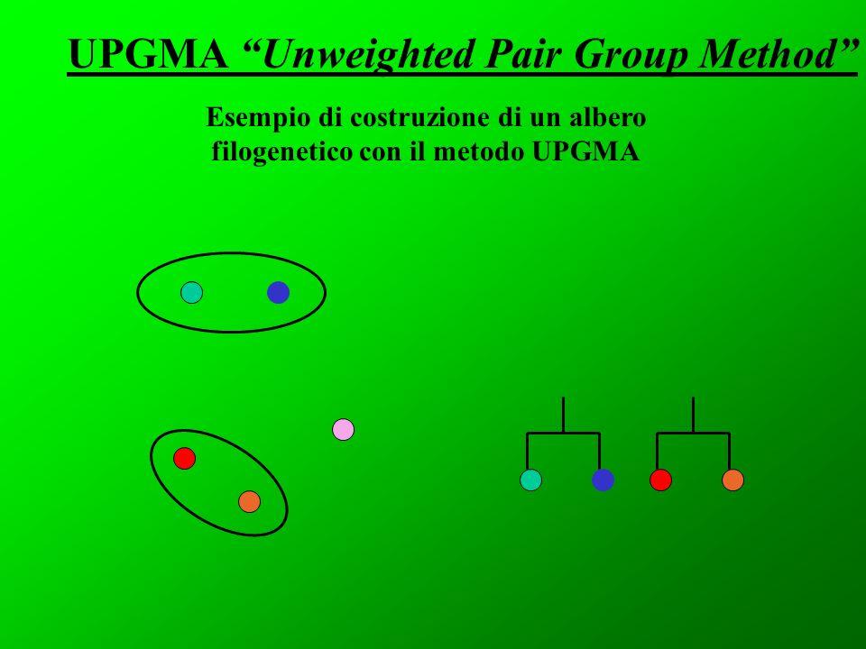 UPGMA Unweighted Pair Group Method Esempio di costruzione di un albero filogenetico con il metodo UPGMA