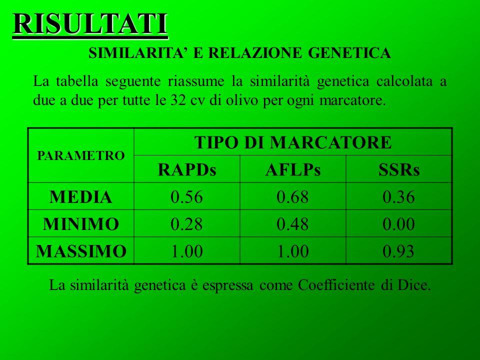 RISULTATI SIMILARITA E RELAZIONE GENETICA PARAMETRO TIPO DI MARCATORE RAPDsAFLPsSSRs MEDIA0.560.680.36 MINIMO0.280.480.00 MASSIMO1.00 0.93 La tabella seguente riassume la similarità genetica calcolata a due a due per tutte le 32 cv di olivo per ogni marcatore.