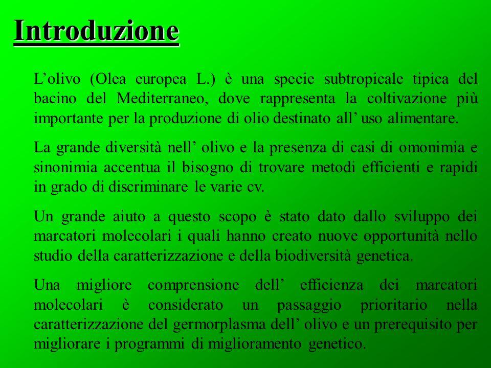 Lolivo (Olea europea L.) è una specie subtropicale tipica del bacino del Mediterraneo, dove rappresenta la coltivazione più importante per la produzione di olio destinato all uso alimentare.