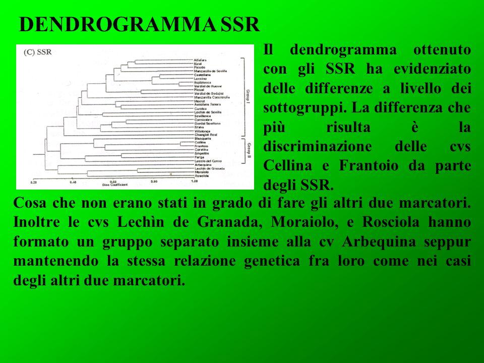 Il dendrogramma ottenuto con gli SSR ha evidenziato delle differenze a livello dei sottogruppi. La differenza che più risulta è la discriminazione del
